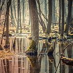 Lasy Koz�owieckie