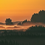 Chahary, Poleski Park Narodowy