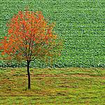 - jesienne drzewko