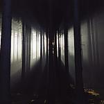- �wit w lesie