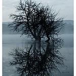 - Drzewo