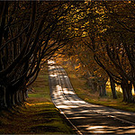 photo_beech_avenue03.jpg