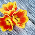 - tulipany trzy