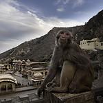 Galta - Świątynia Małp