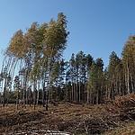 Tuszkowy k/ Lipusza Tu by� kiedy� las. 14-10-2018; 12-37; DzejPi