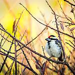 Ptak p�on�cego krzewu ;)