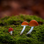 HD_mushrooms_4.jpg