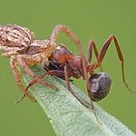 - Marny koniec mrówki...