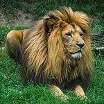 - Król z wrocławskiego zoo