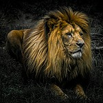 - Król